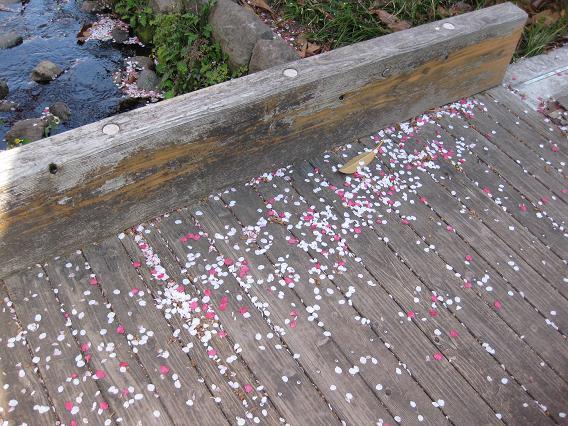 2011桜-2.jpg