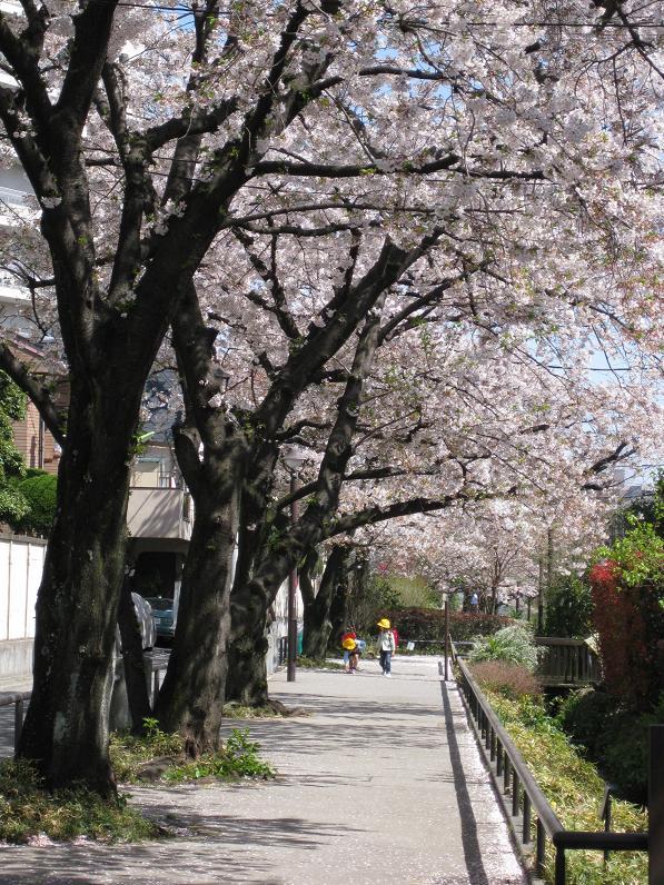 2011桜-3.jpg