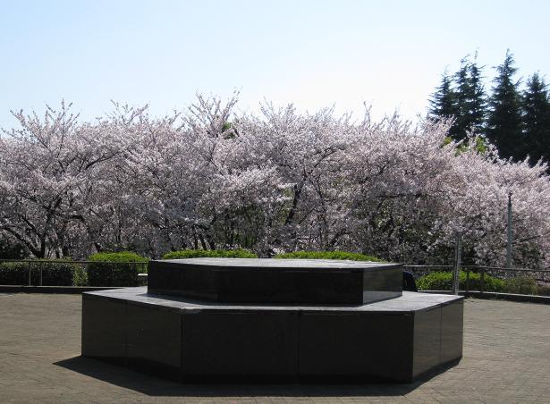 2011桜-5.jpg