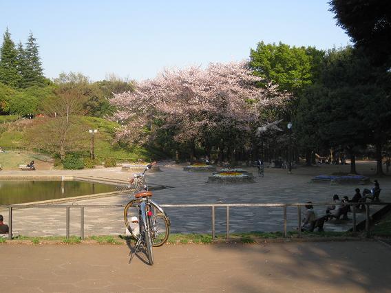 2011桜-7.jpg